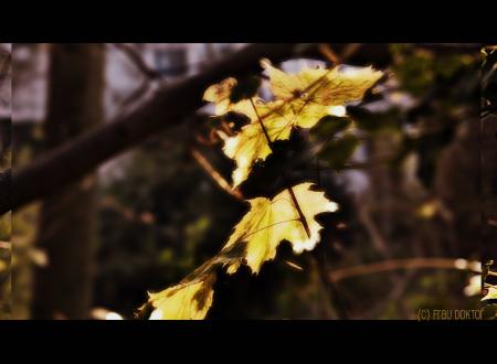 Herbst - die Blätter fallen