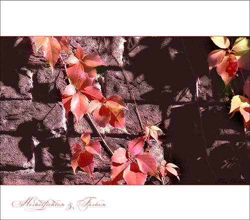 Herbstlichter - Goldener Herbst