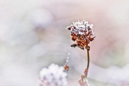 winterperlenkette