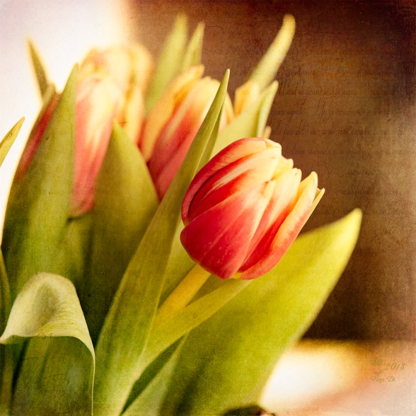 Sonnenboten Tulips
