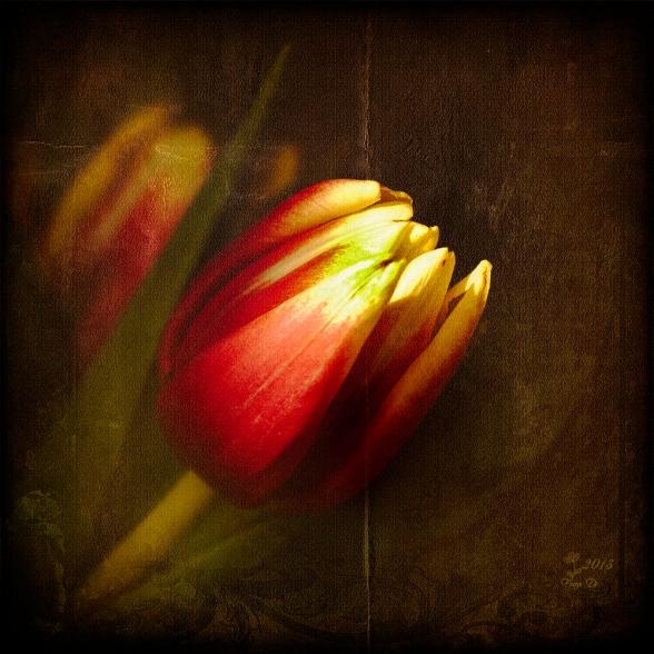 tuliplady