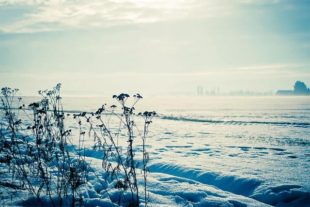 Foto Wintertraeume ohne Textur