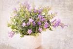 Glockenblumen für den Frühling