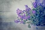 Spring Greetings - Frühlingsgrüße