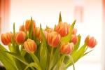 Tulpenstrauss ohne Texturen