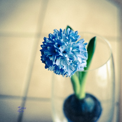 DSC_0026-bluelomo