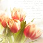 Tulpengrüße