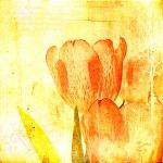 Tulpe abstrakt