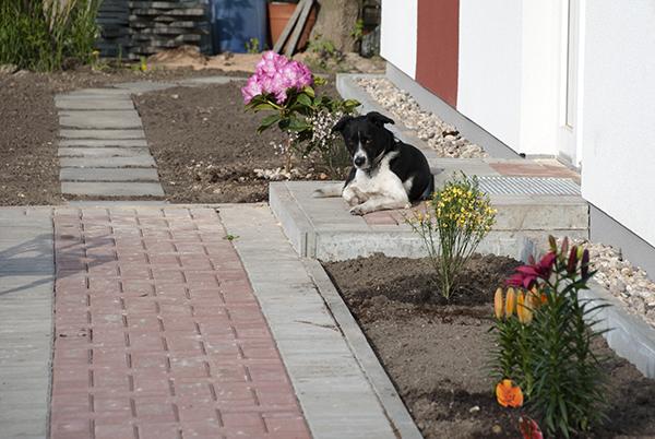 Unser Eingang mit Wachhund :-)