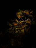 Abendrunde - Bäume und Sträucher im Licht der Laternen (texturiert)