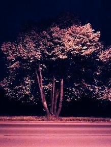 Bäume im Licht der Straße