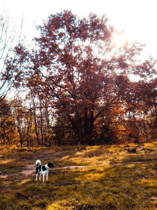 alte Bäume im Sonnenlicht