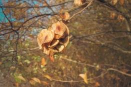 Herbstfrüchte getrocknet