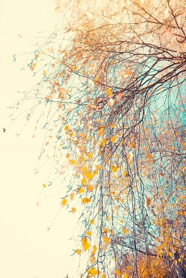 Herbstgold im Licht