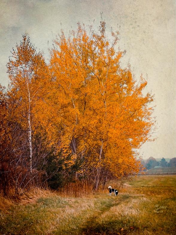 novembertaghund