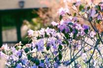 Blick in blühende Gärten
