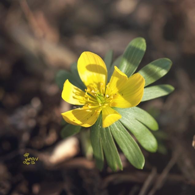 Gelb im Garten