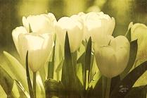 tuliplight