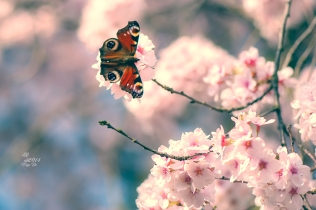 Baumblüte in vielen Varianten