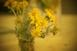 Gelb am Wegesrand eingesammelt