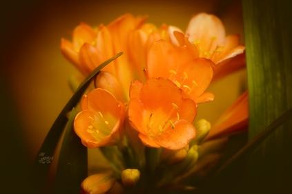 Erst nach dem Umzug in den Garten gibt es Blüten ohne Ende