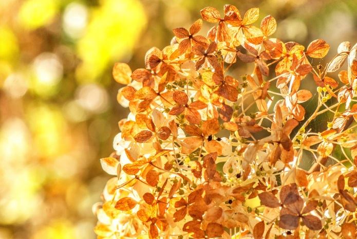 Herbstschönheiten