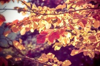 Herbstlichter