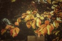 Herbstlicht