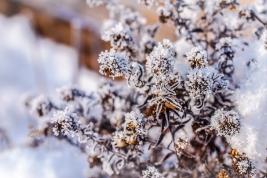 Kleines ganz groß winterlich