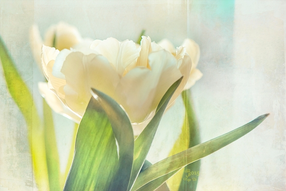 the-tulip
