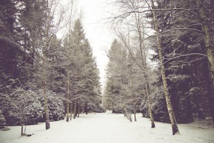 winter-spaziergang (1 von 1)