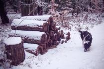 winter-spaziergang (16 von 25)
