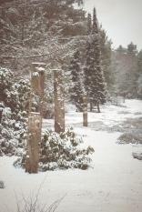 winter-spaziergang (19 von 25)