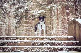 winter-spaziergang (23 von 25)
