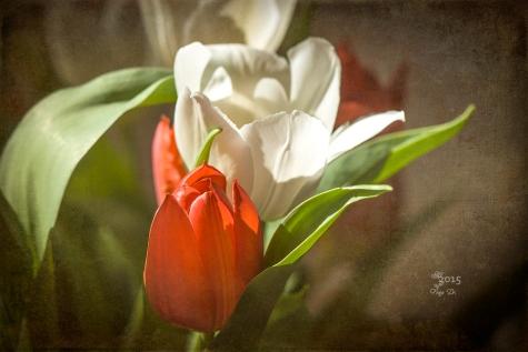 schneeweiss-rosenrot