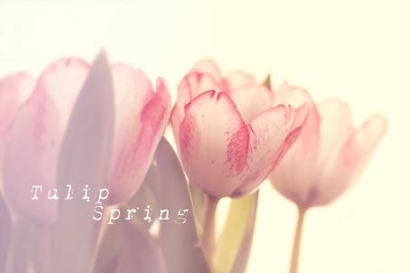tulpen-fruehling