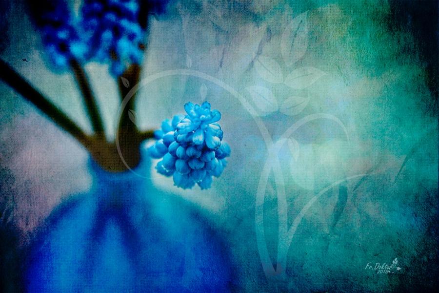 Perlenhyazinthen - blaue Perlen