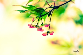 Macros, entstanden Im Bonsaigarten Ferch