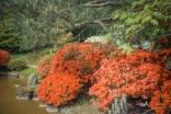 Streiflichter aus dem Japanischen Bonsai Garten in Ferch bei Potsdam