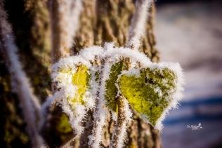 Herzchen im Winter