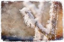 Wintergestalten in Weiss