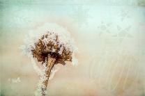 Wintergestalten texturiert
