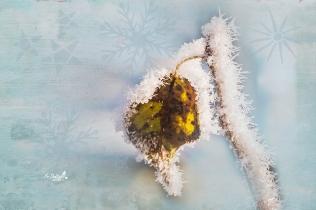 Wintergestalten in Weiß