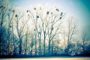 Winterwald 3