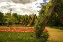 tulpenfelder3