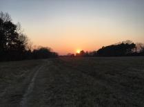 Hunderunde mit Sonnenuntergang