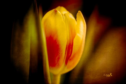 tulpen-adaptionen3