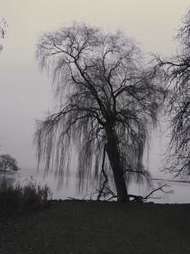 Schlossparkansichten im Winter