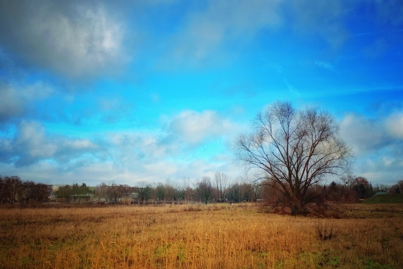 Und wieder Bäume und Wolken