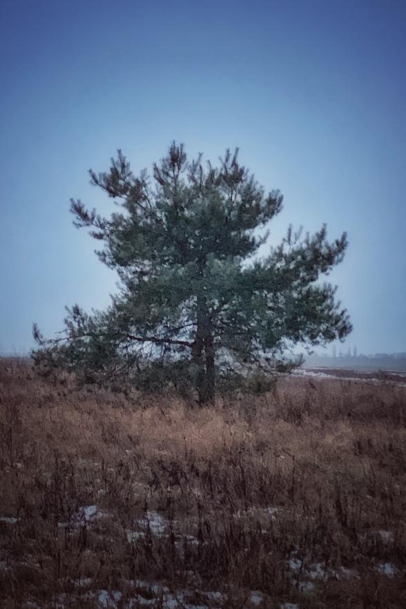 Bäume - Hunderunde
